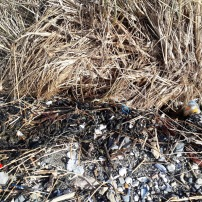 SUTTON CREEK POLLUTION (11)