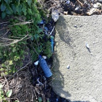 SUTTON CREEK POLLUTION (2)