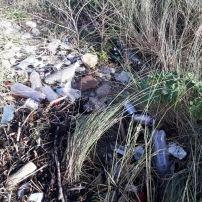 SUTTON CREEK POLLUTION (9)