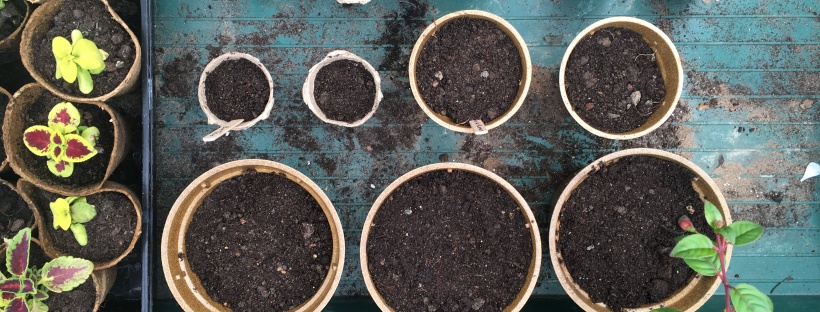 Grow your own seedlings plants