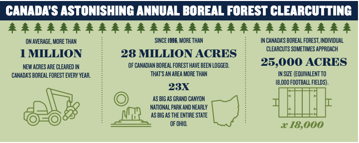 Clear cutting deforestation logging Canada